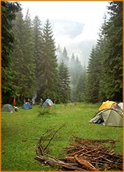 Туристическая стоянка на поляне среди хвойного леса.