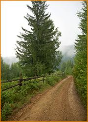 Дорога, ведущая к подножью горы в Карпатах.
