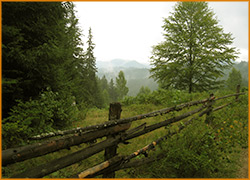 Уютный, деревянный забор вдоль тропы.