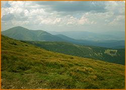 С набором высоты меняется растительность гор.
