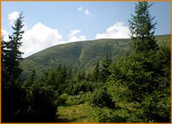Хвойный лес у подножья горы.
