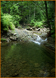 Речушка в Карпатских горах.