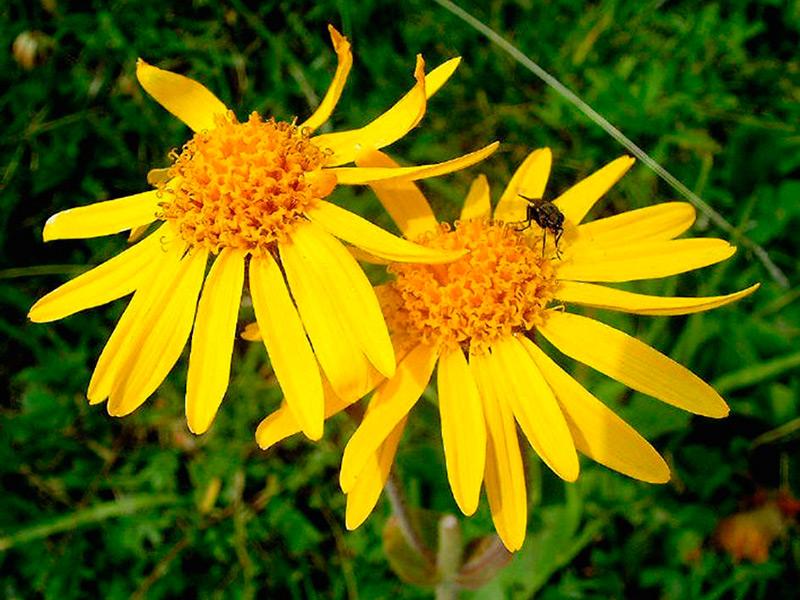 Цветы и растения крыма фото